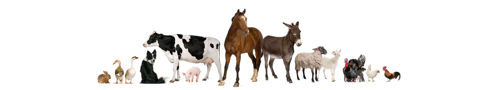 Wanganui Veterinary Services